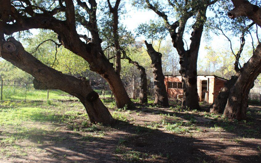 500 S 8th St, Santa Anna, Texas ***REDUCED
